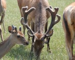 Deer 2 years old